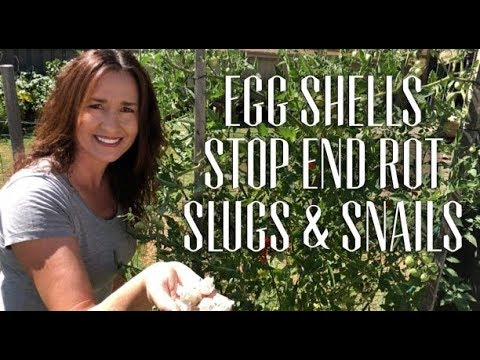 Egg Shells for Blossom End Rot & Slug, Snail Protect Veggies