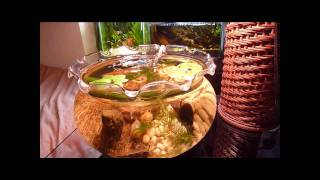 ピンポンパール 金魚鉢 thumbnail