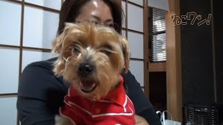 3匹の犬を飼う松山市のご家族。なかでも14才で保健所に収容されたボロ...