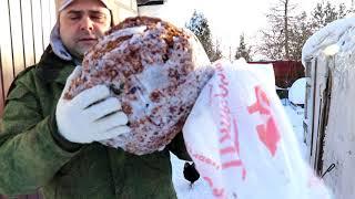 Витамины для кур на зиму яблочный жмых