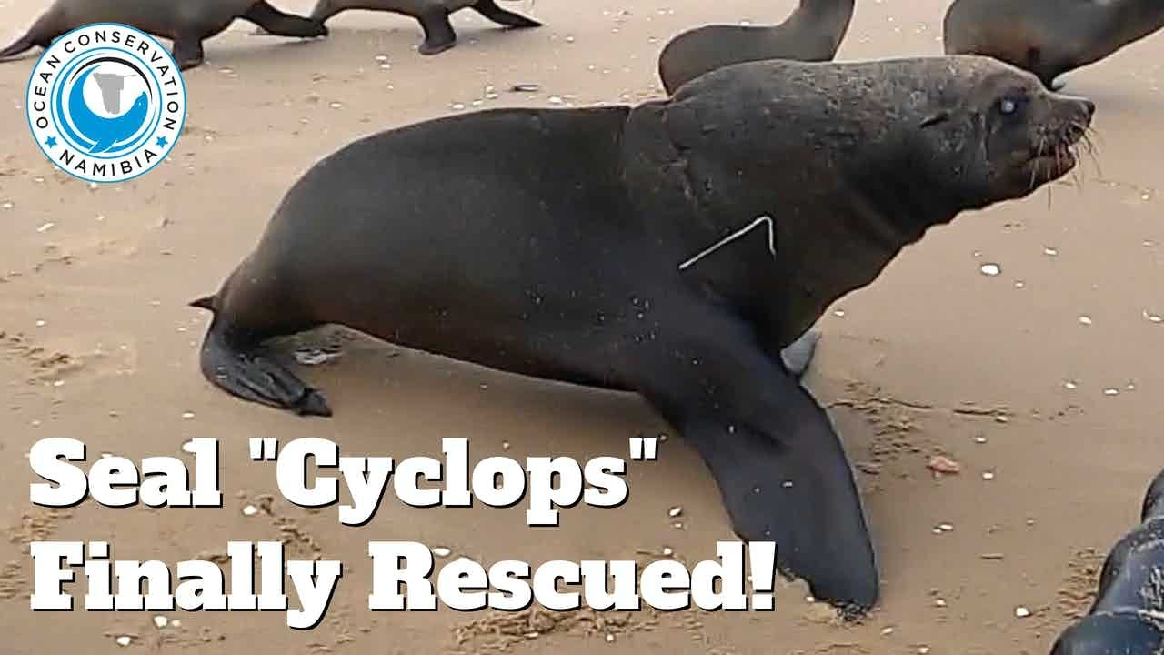 """Seal """"Cyclops"""" Finally Rescued!!!"""