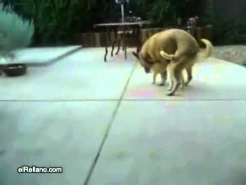 Dog rapes cat from YouTube · Duration:  34 seconds