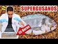 Supergusanos CarnÍvoros Vs Pez 24 Horas | Experimentos Con Mike