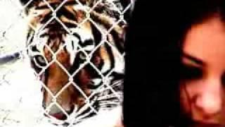 Evanescence - Tourniquet fan video