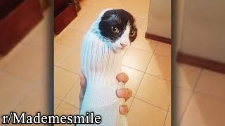 r/Mademesmile | Cat in a sock
