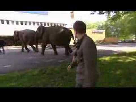 Boston Tea Party - Elefantattacken
