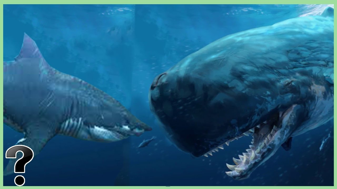 What If A Megalodon Sh...