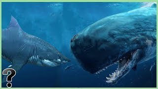 What If A Megalodon Shark Fought The Livyatan?