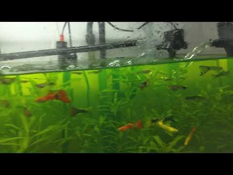 Tratamento Em Aquário. 48 Horas Com Aqualife, Vale Apena ?
