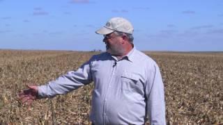 Brian Berns:  No Till Seeding Immediately After Harvest