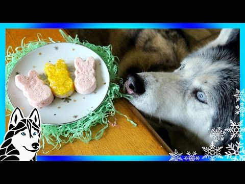 DIY PEEPS FOR DOGS | Marshmallow Easter Dog Treats | DIY Dog Treats | Snow Dogs Snacks 70