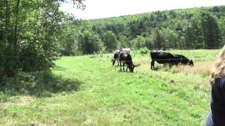 Starting a Farm Business in Maine