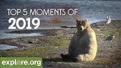 Top 5 Animal Live Cam Moments of 2019
