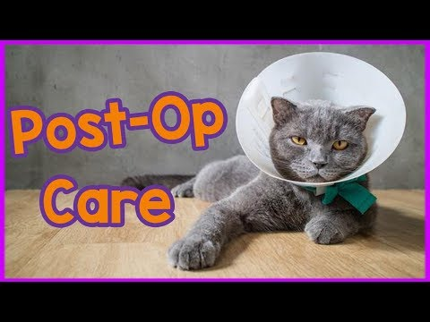 Caring for a cat after sedation - Top tips and advice!