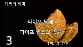 파이프 연초의 종류와 특징 - 3 페릭, 라타키아