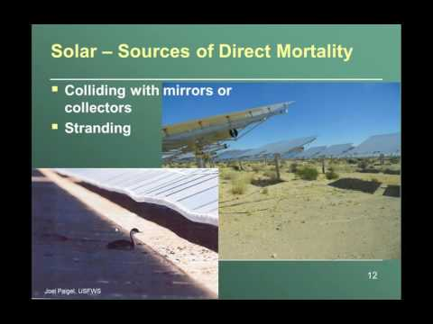 Measuring effects of wind power and solar power development on wildlife1469034110