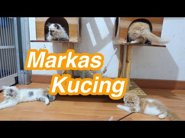 Proses adopsi kucing baru, Boleh Ambil yang Mana Aja Asal ???
