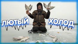 В лютый холод с летней прикормкой Дядя Фёдор ломает стереотипы зимней рыбалки