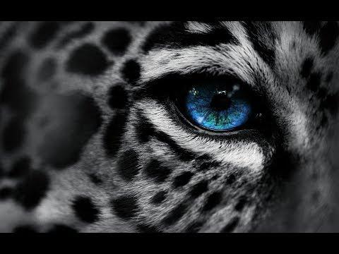 Documentaire // Le territoire des léopards // ☆ La vie ou la mort ☆【FR】