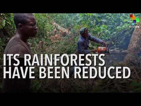 Chocolate Cravings Driving Mass Deforestation in Ivory Coast