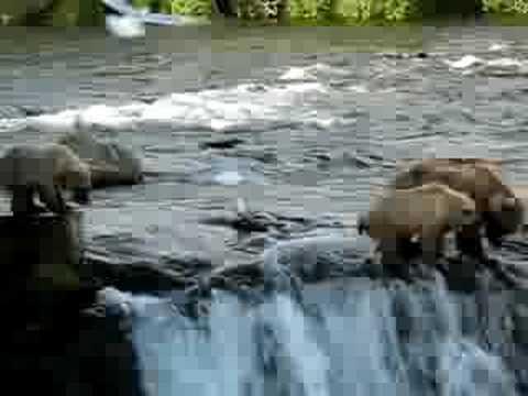 Brown Bear Fishing Brooks Falls