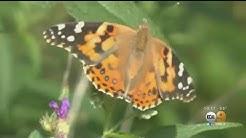 1 Billion Butterflies Flutter Into SoCal