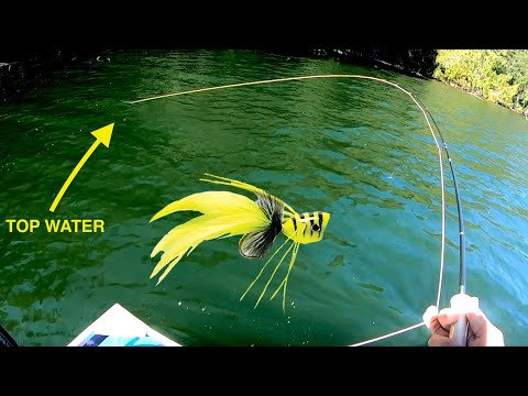 Fly Fishing TOP WATER For Largemouth! (Lots Of Fish)