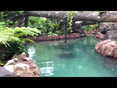 BEHIND THE SCENES - Discovery Cove Fresh Water Oasis