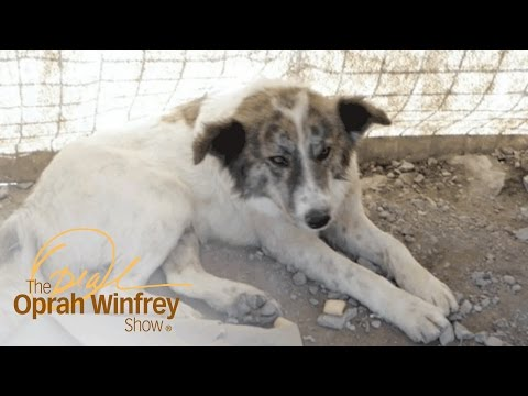 A Dog Who Saved Lives in Afghanistan Finds a Home with a U.S. Soldier | The Oprah Winfrey Show | OWN