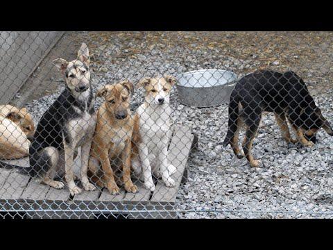Вопрос: Почему люди идут работать на живодерню (отлов собак и т д)?