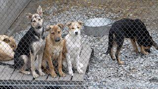 Обыкновенная жестокость, или Отлов и отстрел бродячих животных в Центральной Азии