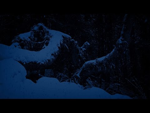 Passing Trees Buried In Snow At Night | Stock Footage