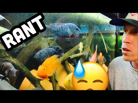 Jack Dempsey Fish Tank Mates -  Aggressive Levels