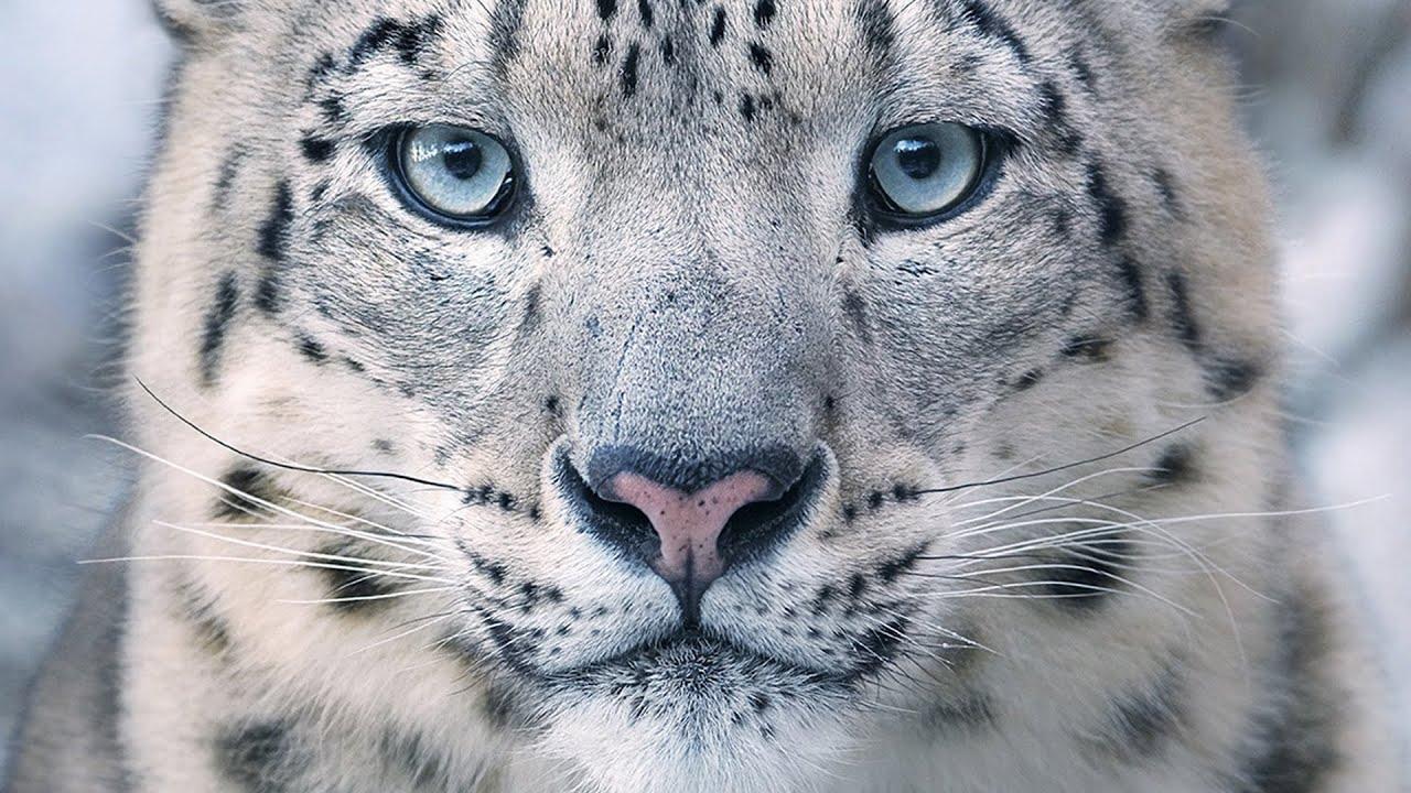10 قطط هي الأروع من بين القطط البرية !