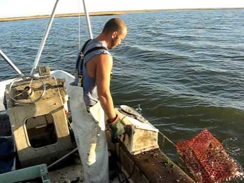 Seaview Crab Company Shaking Crab Pots