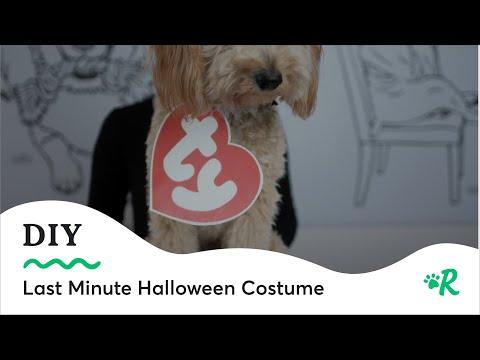 DIY Last Minute Beanie Baby Halloween Dog Costume | #DIYWednesday | Rover.com