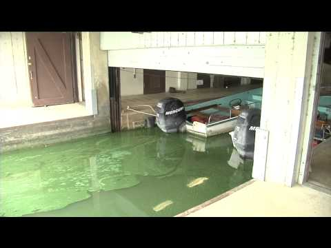 Toxic Algae Closes 3 Madison Beaches