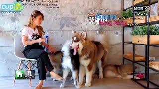 Dog in Town ในรายการ The Animal Lulla 19 ธันวาคม 2558