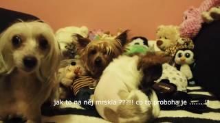 Kanál který týrá psy - Denisa TV, Luboš!