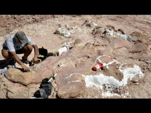 Dinosaur Discovers:  Titanosaur