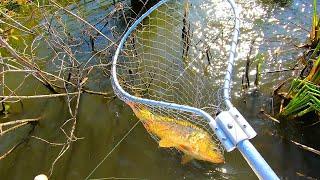 Как быстро поймать много карпа? Лучшая снасть! Выкорчевываю рыбу с непролазного коряжника!