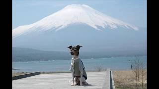 愛犬、風太の想い出のショートムービーです。 主演:風太 撮影:Fuuta-P...