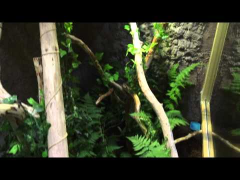 Homemade iguana tank #2 added Moore living greens!