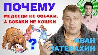 09    Почему медведи не собаки, а собаки не кошки?    Затевахин о Животных