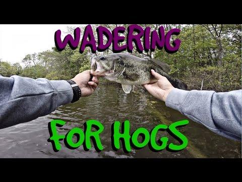 Wader Fishing for Largemouth Bass
