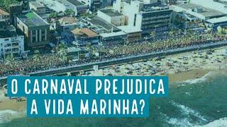 O impacto do carnaval de Salvador na vida marinha