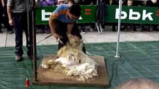 Esquileo de oveja.