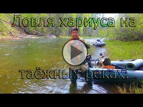 Рыбалка на Ангаре: видео ловли на реке, рыбалка на хариуса