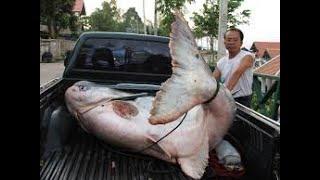 Рыбалка на озере монстров Бангкок Тайланд 2017