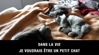 Queen Mimosa 3 - Petit Chat (karaoké)